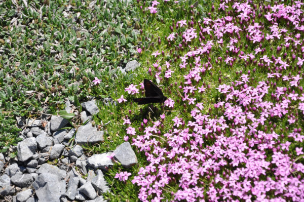_THEMES, animal, butterfly, insects, insekten, natur, nature, schmetterling, tier