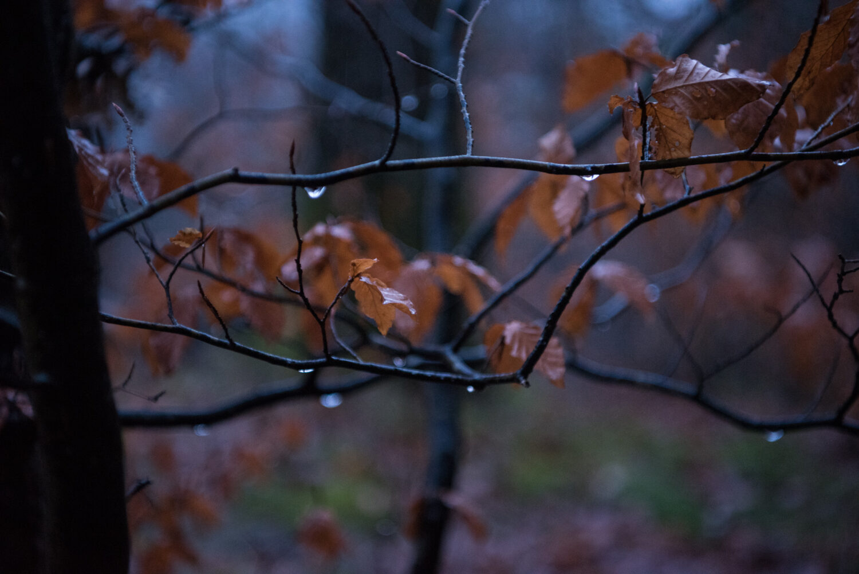 Europa, Geissberg, Geissbergwald, Kanton Schaffhausen, Nordostschweiz, Schaffhausen, Schweiz, _THEMES, forest brush, forrest, landscape, landschaft, sh, undergrowh, unterholz, wald