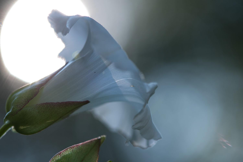 Pick, _THEMES, blume, flower, macro, makro, natur, nature, pflanzen, plants