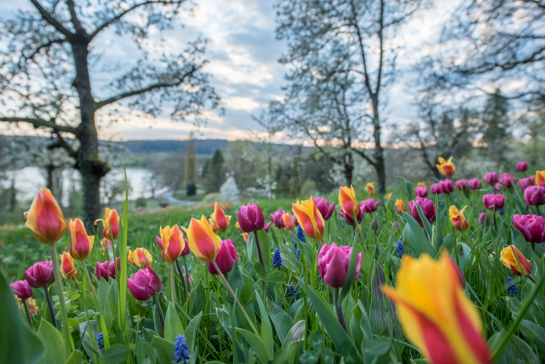 Baden-Württemberg, Deutschland, Europa, Germany, Insel Mainau, Konstanz, Mainau, _THEMES, ausflug, excursion, frühling, jahreszeiten, on the way, season, spring, trip, unterwegs