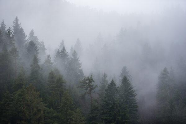Familienausflug, _THEMES, fog, natur, nature, nebel, on the way, reise, travel, unterwegs, zeit mit sabrina